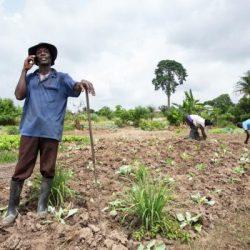 Ghanese boer
